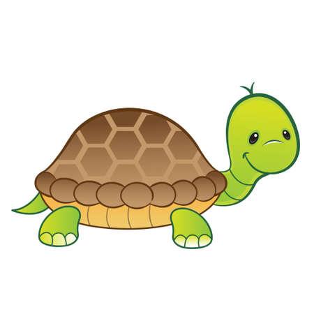 green turtle: Felice tartaruga verde isolato Vettoriali