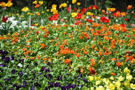 Bothanical garden in Cluj-Napoca, Transylvania