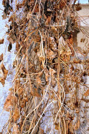 burg: Autumn landscape. Leaves Stock Photo