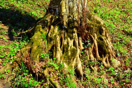 interesting: Roots. Road to the winter and touristic station Poiana Brasov, 12 km from Brasov, a town situated in Transylvania, Romania, in the center of the country. 300.000 inhabitants.