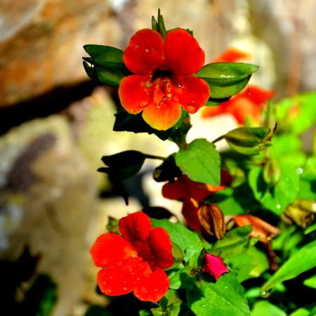 Nice flowers in the garden in early summer