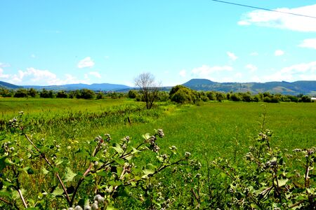 Green landscape. Plain with grains in the harvesting time, in summer days.