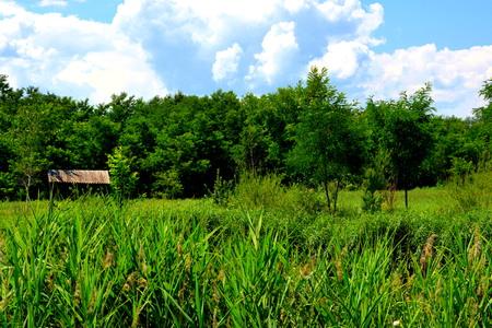 Green landscape. Plain in Transylvania in midsummer Stock Photo