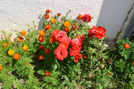 Nice flowers in the garden in midsummer. Green landscape. Stock Photo