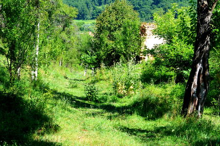 Typical rural landscape in the plains of Transylvania, Romania. Green landscape in the midsummer, in a sunny day Reklamní fotografie - 84119357