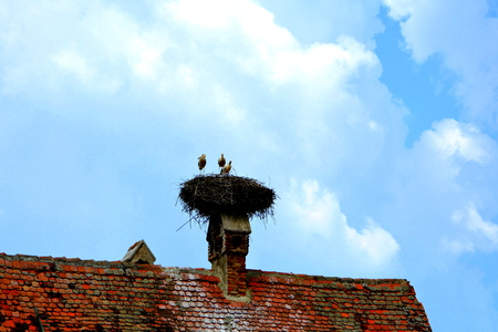 Storks in a nest. Typical rural landscape and peasant houses in  Dealu Frumos, Schoenberg, a village in Merghindeal commune in Sibiu County, Transylvania, Romania. It was first mentioned in a sale-purchase act dating back to 1280.