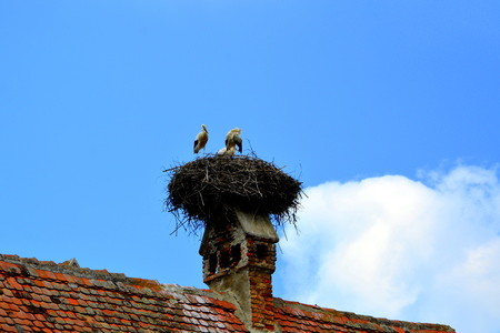 wierd: A family of storks in nest. Typical rural landscape and peasant houses in  Vărd,Wierd, Viert, a saxon village in the commune Chirpăr from Sibiu County, Transylvania, Romania. Stock Photo
