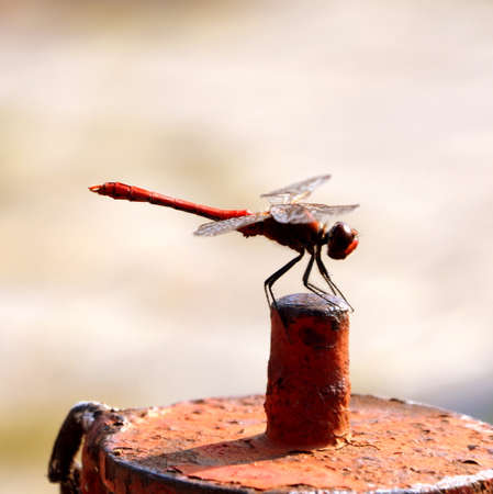 A close-up of a dragon fly in a summer day Stock Photo