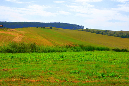 Typical rural landscape in the plains of Transylvania, Romania. Green landscape in the midsummer, in a sunny day