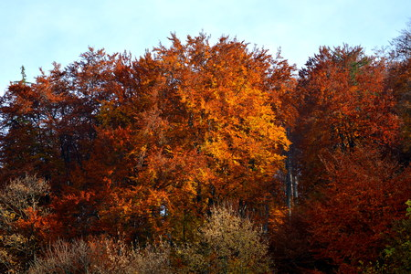 Autumn color and Typical rural landscape in the forests of Transylvania