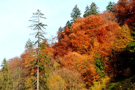Autumn color and Typical rural landscape in the forests of Transylvania.