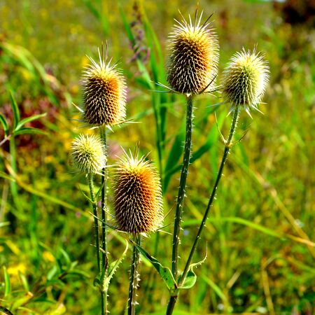 Wild flowers. Typical rural landscape in the plains of Transylvania, Romania. Green landscape in the midsummer, in a sunny day