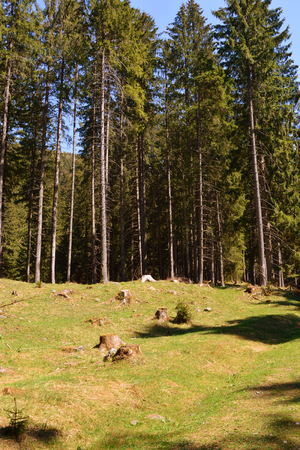 Typical landscape in the forests of Transylvania, Romania. Green landscape in the midsummer, in a sunny day 免版税图像