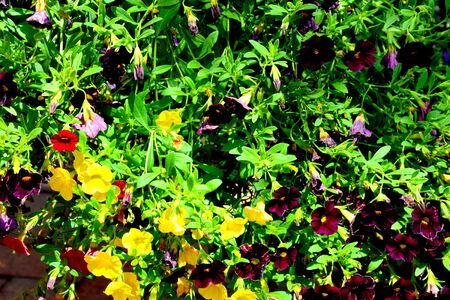 Nice flowers in the garden in midsummer, in a sunny day. Green landscape
