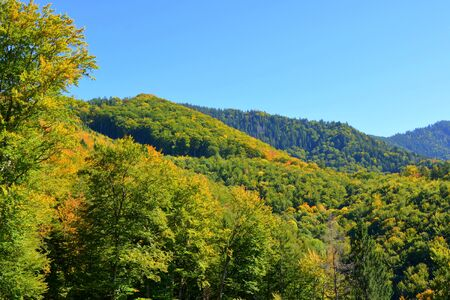 Typical landscape in the forests of Transylvania, Romania. Green landscape in the midsummer, in a sunny day
