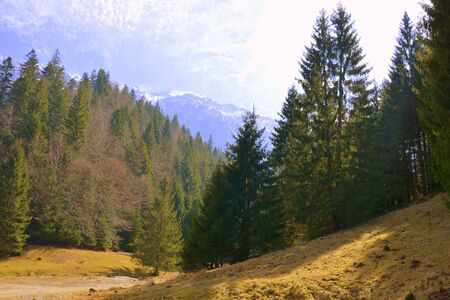 Piatra Craiului in Carpathian Mountains, Transylvania. Typical landscape in the forests of Romania. Green landscape in spring, in a sunny day Banque d'images