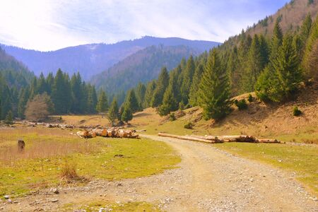 Piatra Craiului in Carpathian Mountains, Transylvania. Typical landscape in the forests of Romania. Green landscape in spring, in a sunny day