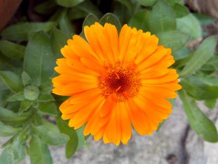 flor: Flor amarilla Stock Photo