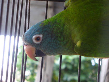 deprived: parrot Stock Photo