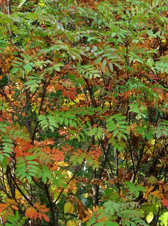 autumn colors Stock Photo - 4920710