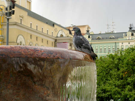 There are buildings,  fountain  and  pigeon .  Moscow.                               photo