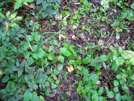 adn: Este es el campo de hierba del ADN de hojas verdes secas Foto de archivo