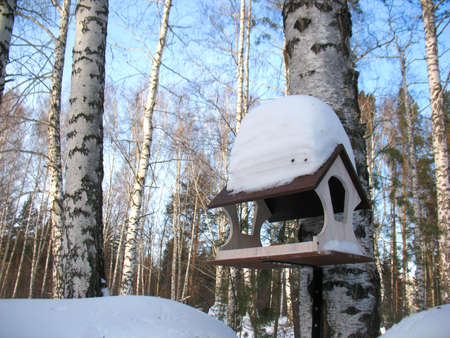bird feeder: There are plants in snow. Winter forest and bird feeder