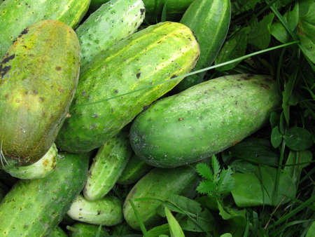 cucumbers: There are green cucumbers Stock Photo