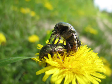 copulation: There are couple of  insects and plant.