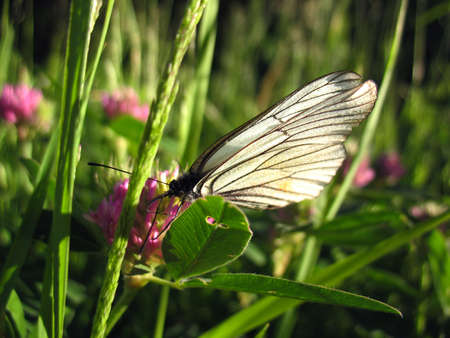 There are insect and plant. The white butterfly  on flower.