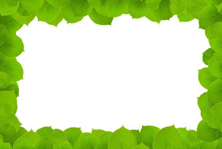 green leafs - frame on white background. clipping path included photo