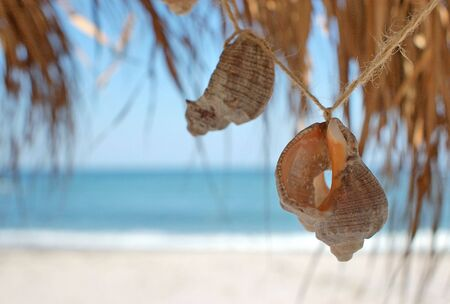 seashells on beach photo
