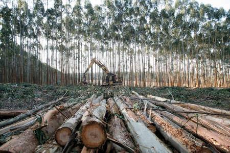 logging: logging equipment Stock Photo