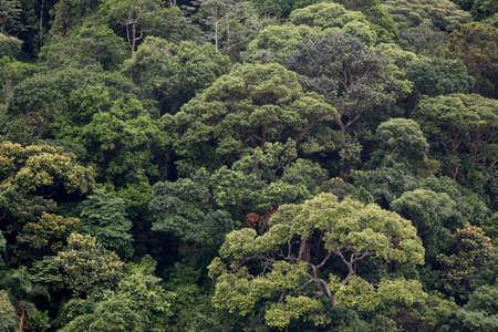atlantic forest in brazil 免版税图像
