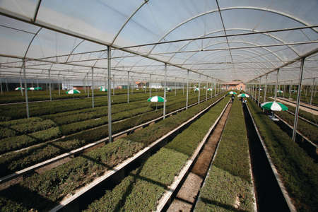 greenhouse to seedling agriculture products to industry Imagens