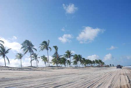 natal: dunes of genipabu with palm trees, natal, brazil Stock Photo