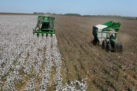 machine working in cotton harvest in brazil