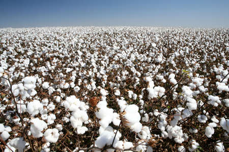 ball of cotton in contrast with blue sky
