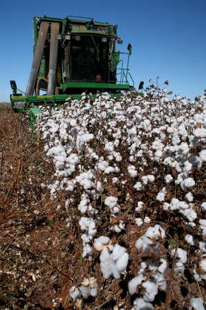 machine working in cotton harvest in brazil