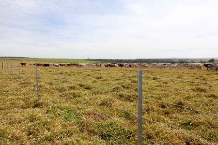 cattle wire: new steel fence in farm with cattle in background on countryside in brazil Stock Photo