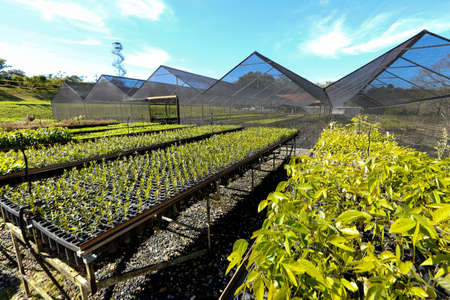 greenhouse to cultivated seeds of atlantic forest to reforestation in brazil