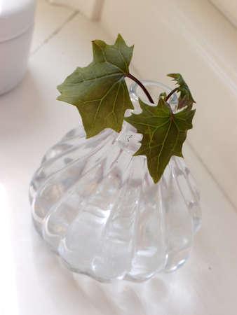 chabby: Ivy leaf in vase