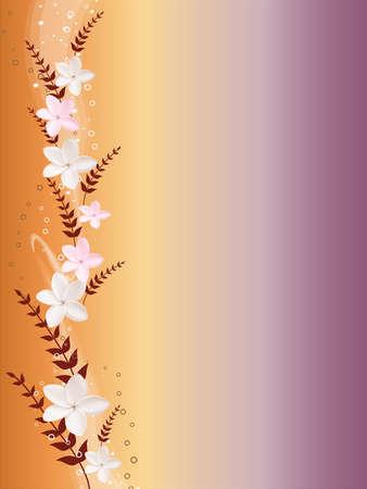 lilium: flower