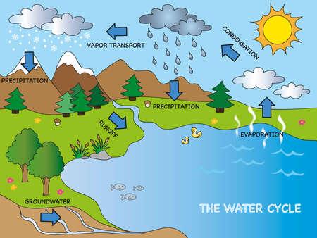 diagrama de arbol: ciclo del agua Foto de archivo