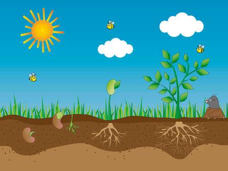 photosynthesis: new born plant  Stock Photo