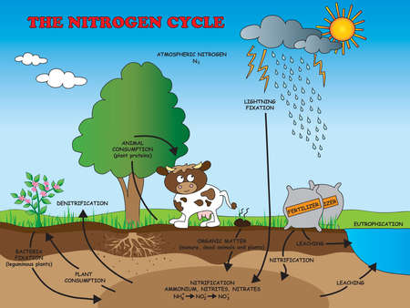 Ilustración del ciclo del nitrógeno para la escuela.