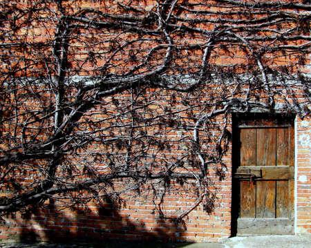 invading: an invading vineyard on a barrack Stock Photo