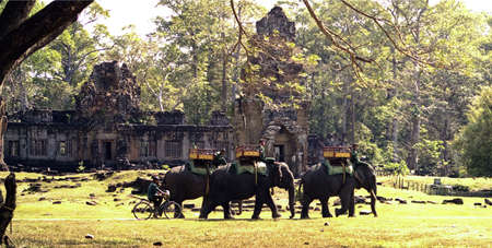 angkor: elephants in Angkor Stock Photo