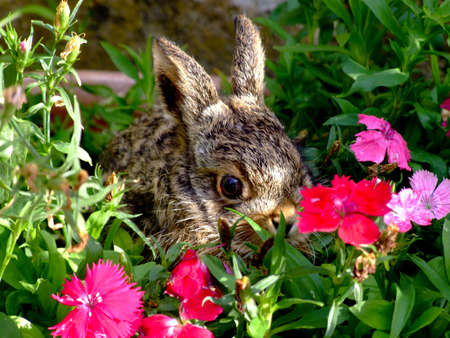 puppy hare amid flowers Stock Photo - 7815126