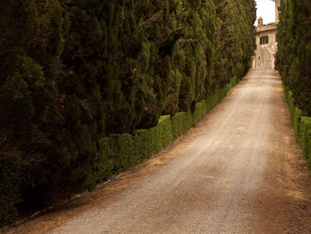 coutryside: cypress alley
